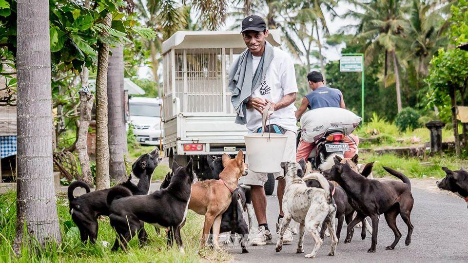 Bawa Wild Dog Feeding