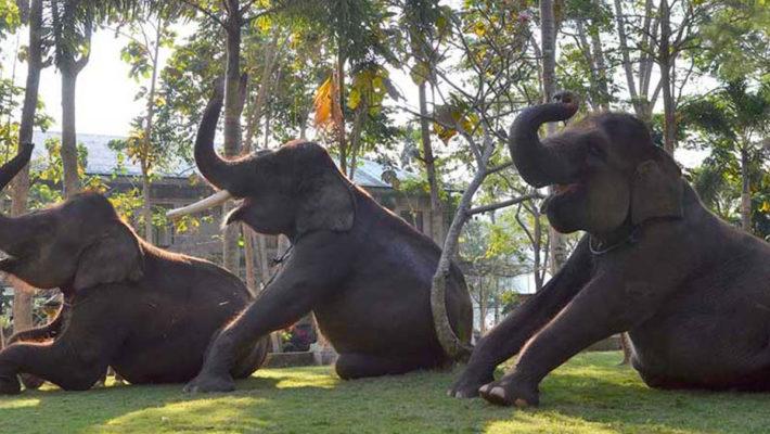 Bakas Levi Rafting and Elephant Park